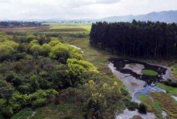 Urbanizar la Reserva Thomas van der Hammen violaría la Constitución
