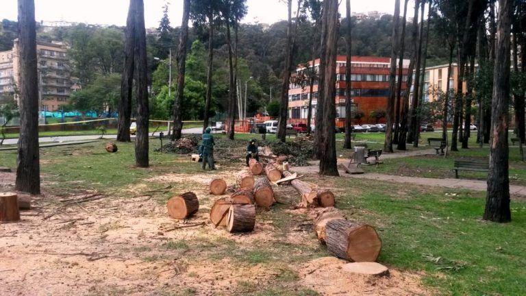 Manuel Sarmiento radica carta en contra de la tala de árboles en Bogotá