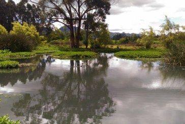 Concejales, académicos y organizaciones ambientales exigieron al PNUD no prestarse para validar la destrucción de la reserva Van der Hammen.
