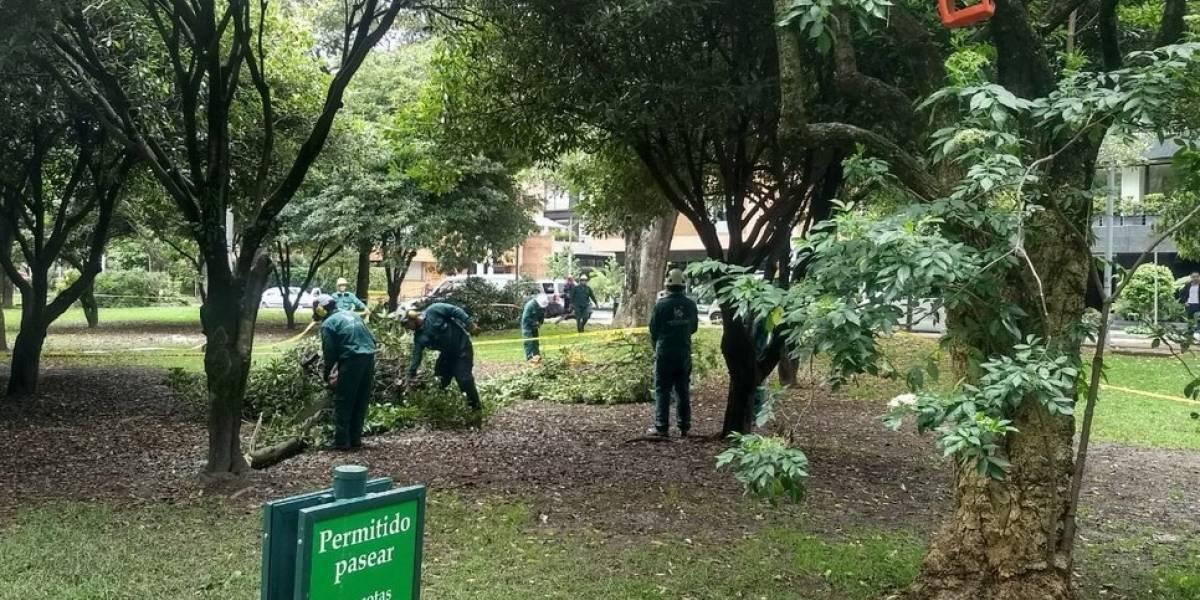 Concejal Manuel Sarmiento exige frenar arboricidio en el parque El Virrey